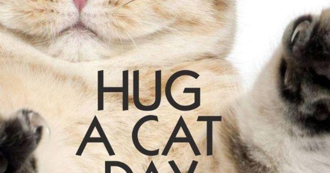 Feline love: It's Hug Your Cat Day