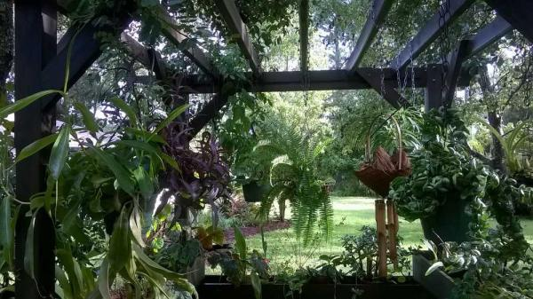 Garden of the month: Abundant trees, exotic flowers and native plants make ...