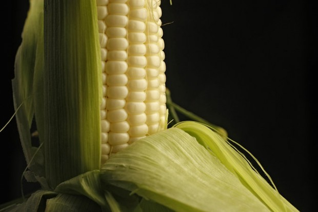 David's Daily Dish: The best way to treat Silver King corn with the loving ...