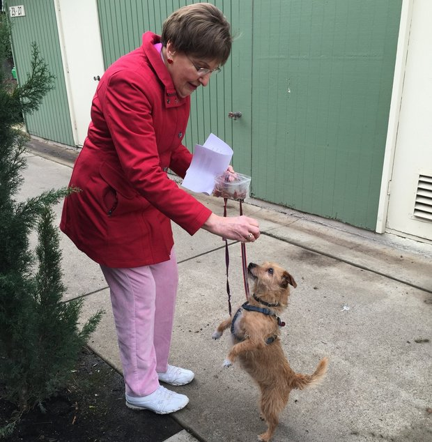 79-year-old dog walker at senior living center walks dogs when owners can't