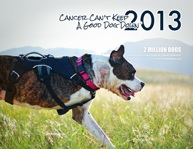 The Puppy Up Foundation announces Cancer Can't Keep a Good Dog Down 2015 ...