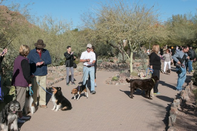 Desert Botanical Garden's 'Dog's Day' lets the dogs out this coming Saturday