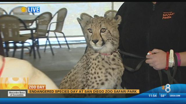 Endangered Species Day at San Diego Zoo Safari Park