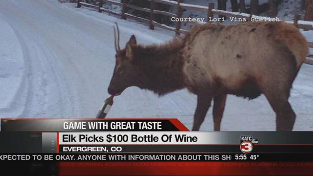 Offbeat News: wine-loving elk, National Brownie Day, cuddly cat and dog