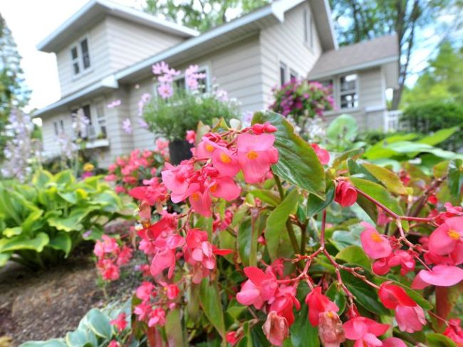 Garden of the Month: Bursting with color