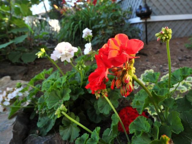 Garden of Month: Beautiful blooms, whimsical touches