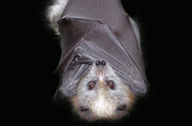 It's National Bat Appreciation Day: Photos