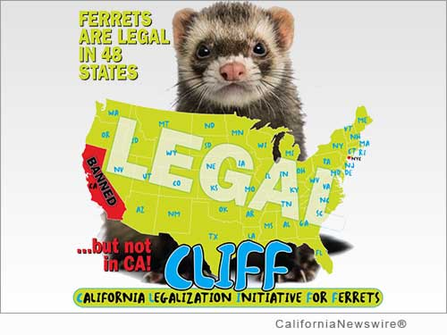On National Ferret Day 2015, California Ferret Enthusiasts Launch Crowdfunding ...