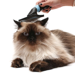 Cat Hairballs Get a Holiday: National Hairball Awareness Day