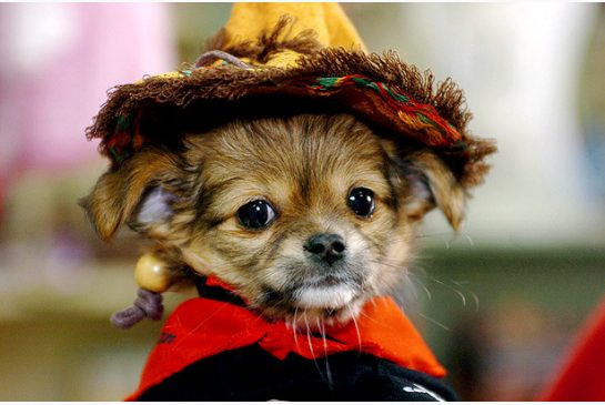SLIDESHOW: Thursday is Dress Up Your Pet Day