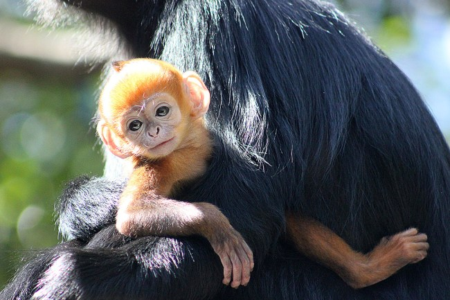 Monkey Day: A gallery of everything monkey to celebrate the occasion