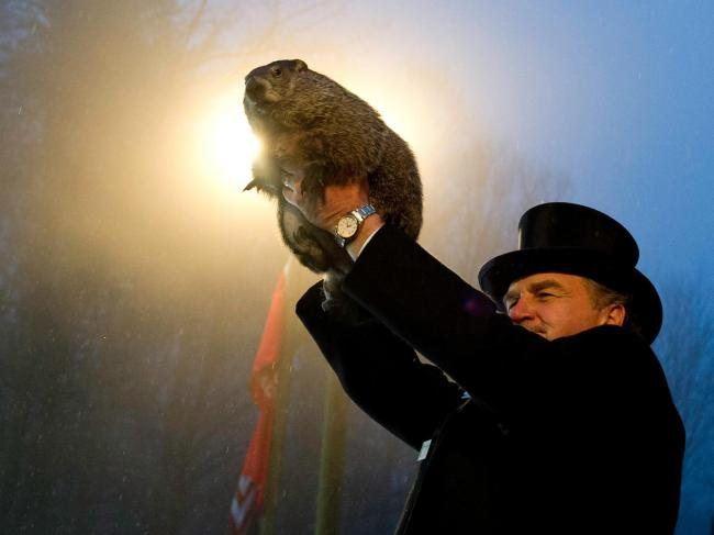 Groundhog Day: Five absurd facts you probably didn't know about the ...