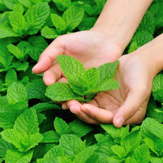 Brookhaven Retreat Celebrates National More Herbs, Less Salt Day Aug. 29