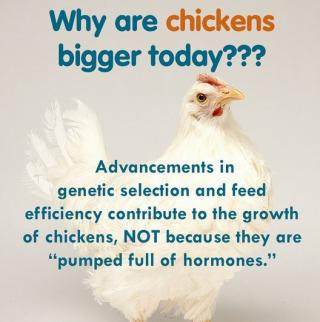 Women in Ag: Celebrate National Chicken Month with #FactsNotFear!