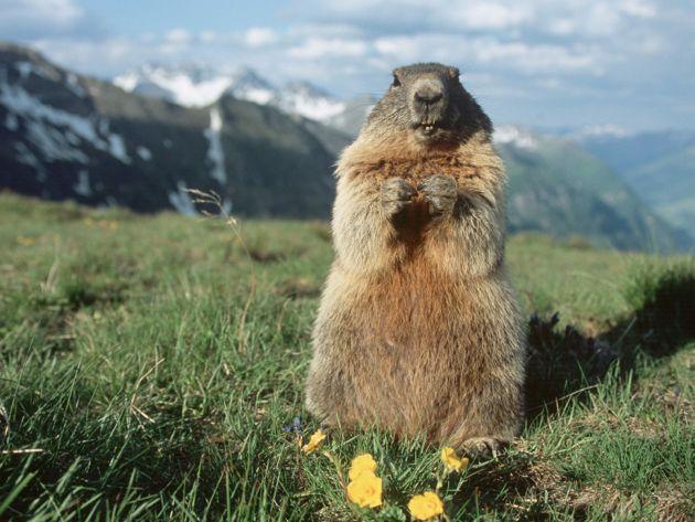 Marmot Day?