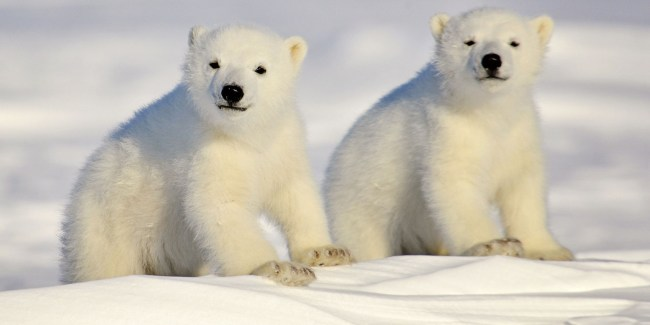 Celebrate International Polar Bear Day With These Stunning Photographs