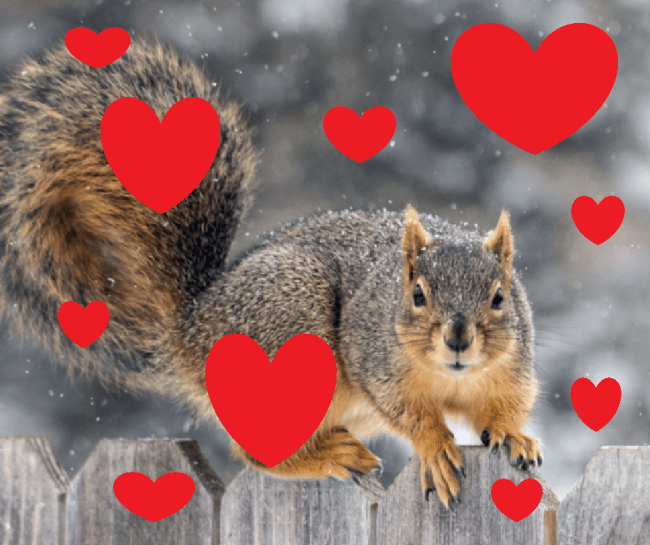 Squirrel Appreciation Day: 19 pictures of squirrels that explain why they're ...
