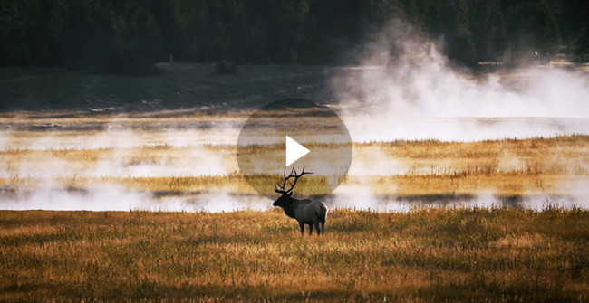 Tuning into Yellowstone