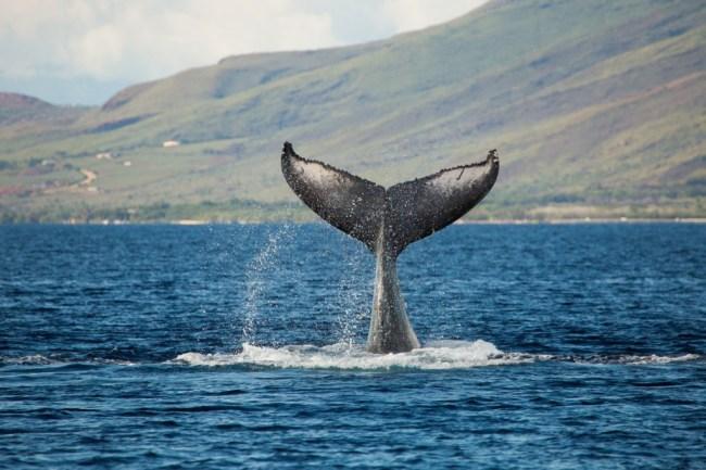 PWF Seeks Vendors for World Whale Day