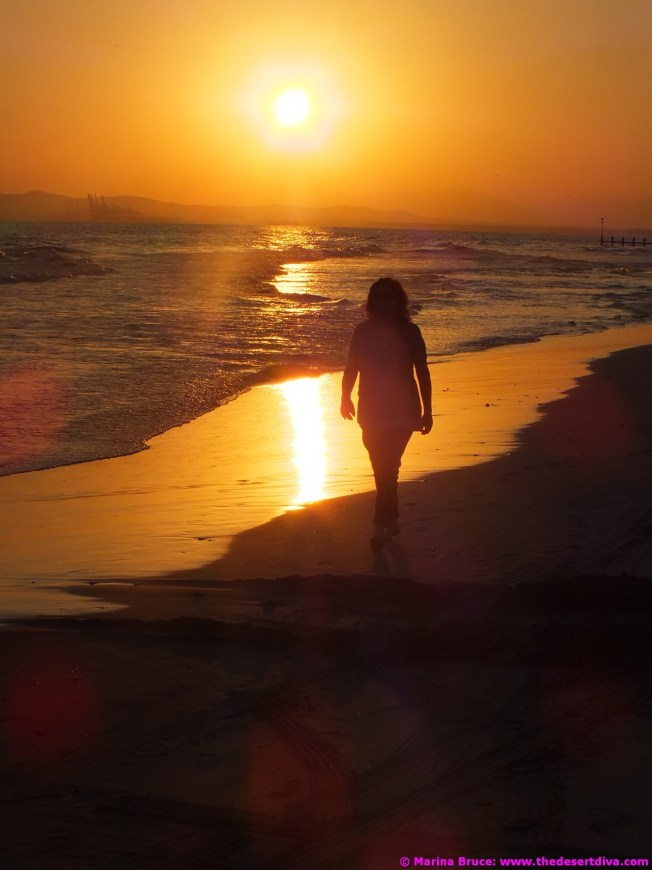 Old bird on the beach at sunset - Salalah 21.12.14