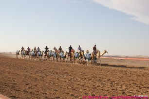 The normal business of camel race training goes on...