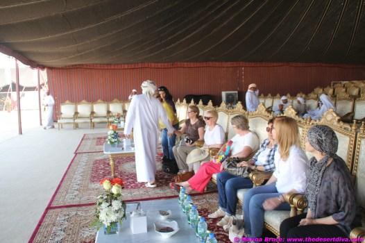 camel festival filomena01