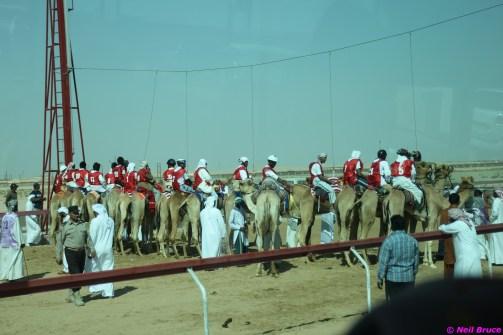 camel festival neil1