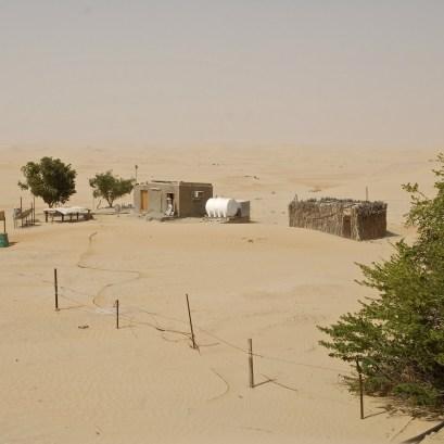 desert life8