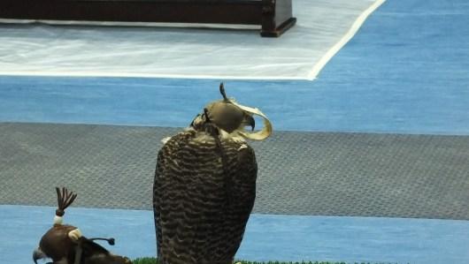 somebody's beak is too long!