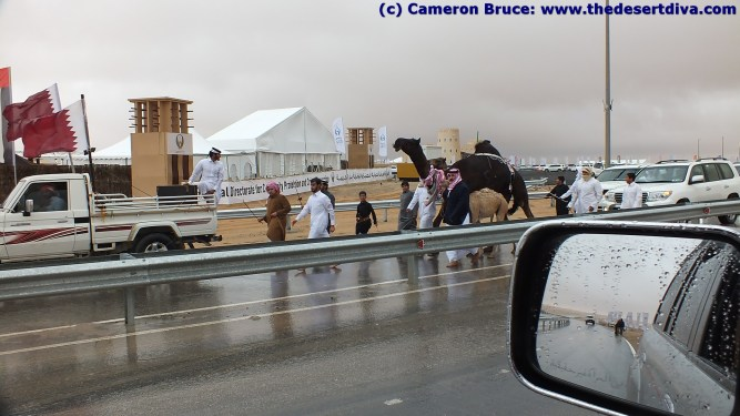 winners parading their camels
