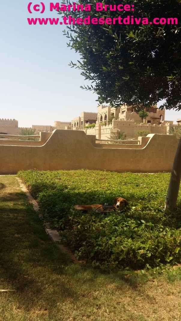 Relaxing at the Qasr Al Sarab