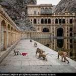 20140225_Rajasthan_9676-Edit