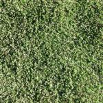 Random image: how-afraid-should-you-lead-artificial-turf-photo