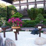 JAPAN'S BONSAI