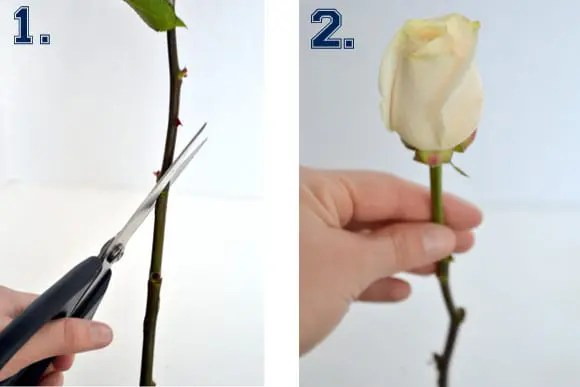 cutting roses tips