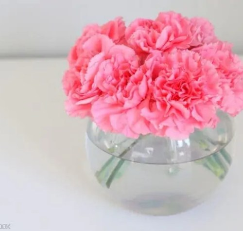 5-pink-carnations-flowers