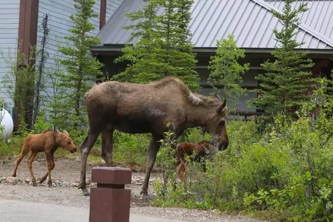 Alaska_travel-64