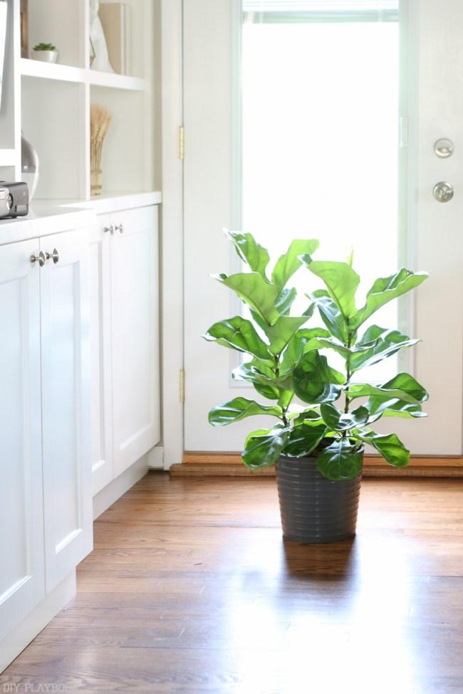 bridget_fall_fiddle_leaf_family_room_light_plan