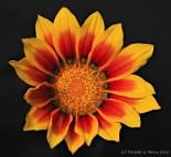 flowers-img_0001