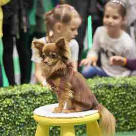 National Pet Show London 2016 - Lucky