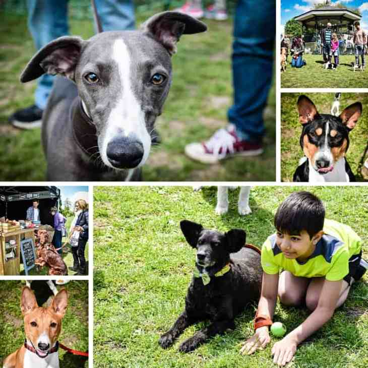 All Dogs Matter Great Hampstead Bark Off Dogs