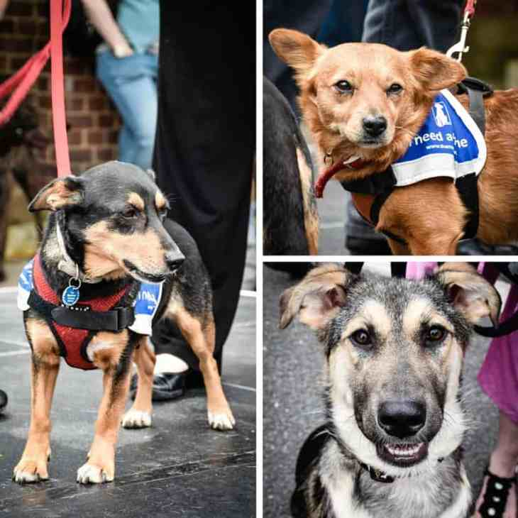 The Mayhew Animal Home - Dogs Needing Homes