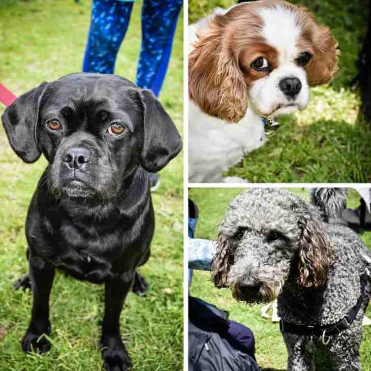 All Dogs Matter Great Hampstead Bark Off - Best Puparazzi Shy Pup