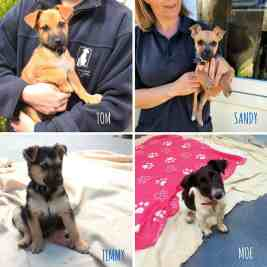 4 Of The Cutest Pups Who Need A Home
