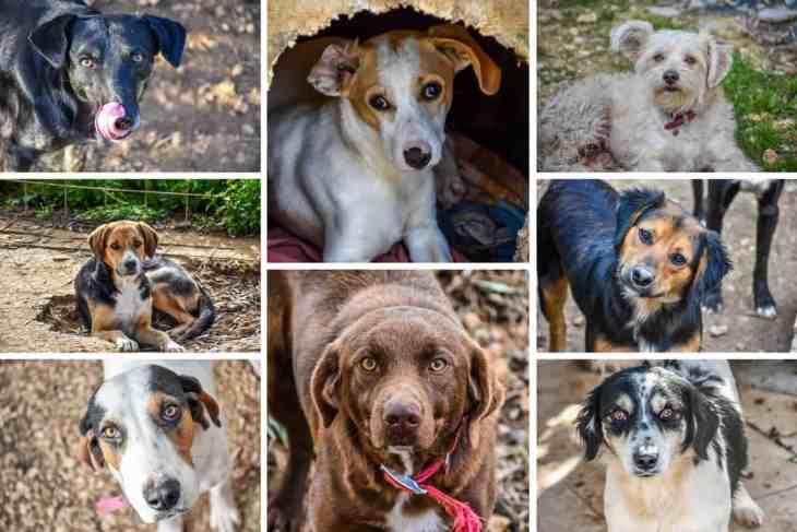 Animal Rescue Kefalonia Collage 5