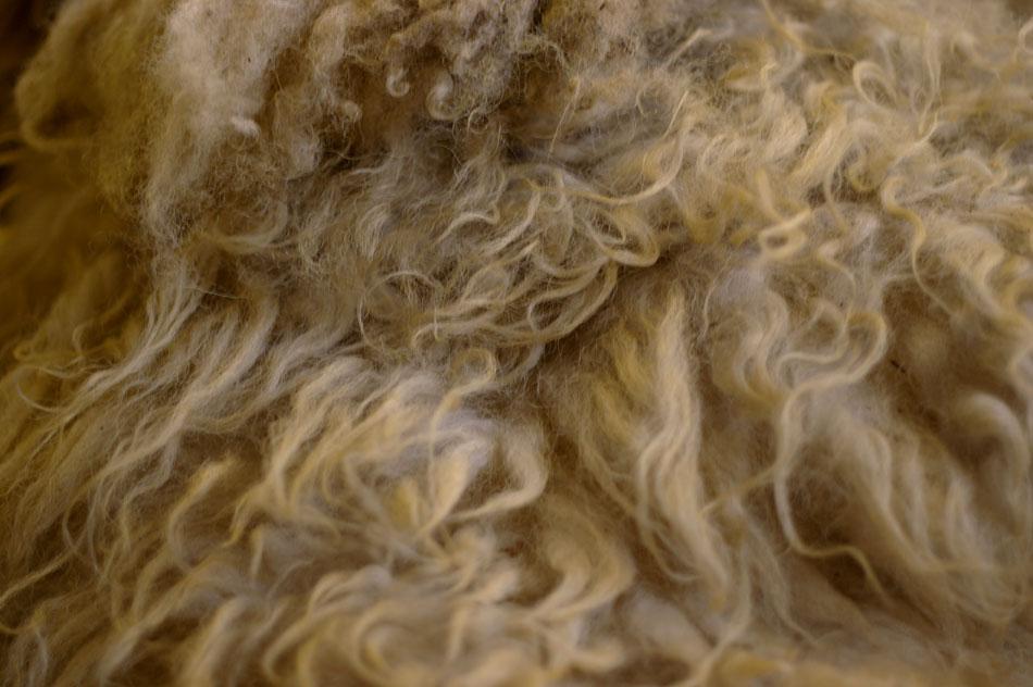 Coarser Shetland Wool - still has long, unruly guard hairs in it