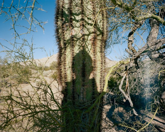 cactusme