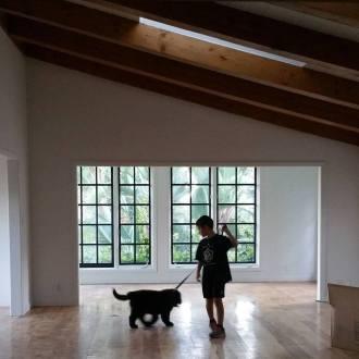 black puppy black windows