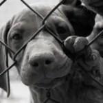 online-pet-adoption-dog-behind-fence