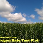 Corn Nitrogen Test Plot via thefarmerslife.com